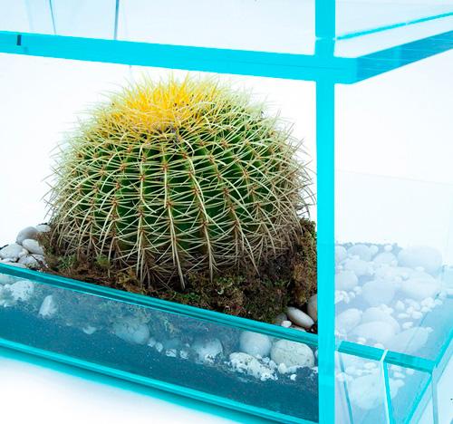 Кактус может спокойно расти внутри мебели