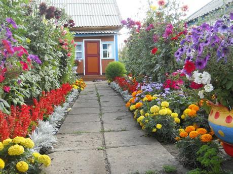 Разноцветный цветник на даче