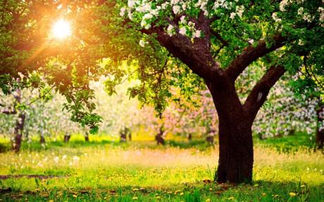 Уход осенью - буйное цветение весной